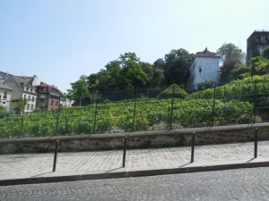 The last vineyards of Montmartre