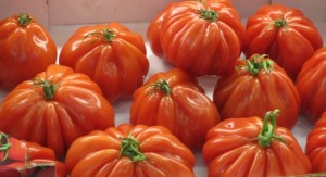 tomatoes au verger d'alice